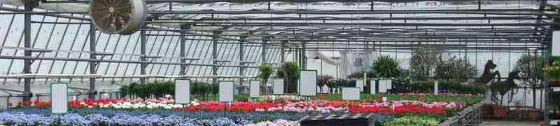 Curso especialista en jardiner a y t cnicas de arte floral for Curso jardineria