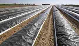 Agac0108-Cultivos-Herbaceos-A-Distancia