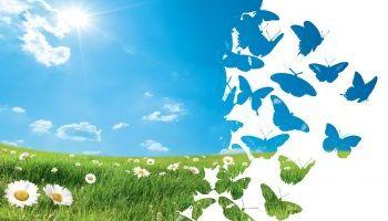 Curso-Educacion-Ambiental