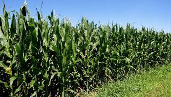 Especialista-Bases-Fundamentos-Agronomicos