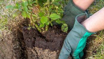 Experto-Nutricionista-Plantas-Ensenanza-Aprendizaje