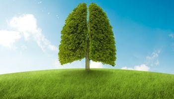 Formador-Medioambiente-Educacion-Ambiental-Monitor-Gestion-Ambiental