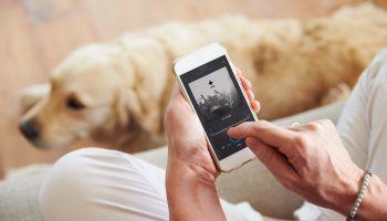 Mf1757_3-Adiestramiento-De-Perros-Para-Deteccion-Busqueda-Salvamento-Y-Rescate-De-Victimas-Online