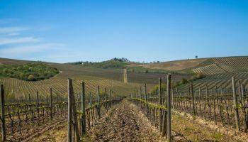 Uf0160-Operaciones-Auxiliares-De-Riego-En-Cultivos-Agricolas-Online